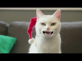Клёвый котик